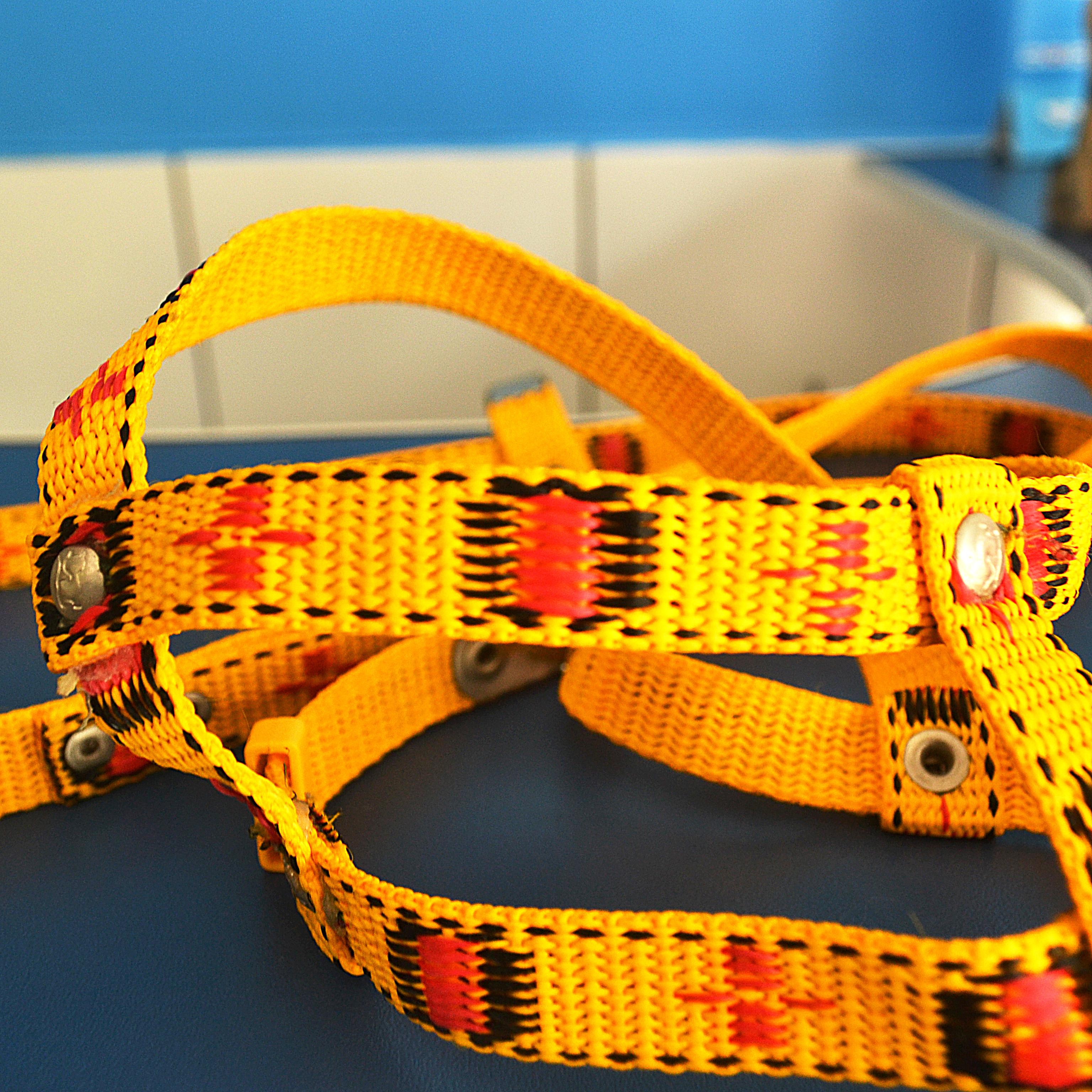 Peitoral com Guia tiras médias pequeno porte yellow & red - mundodaspataspet.com.br